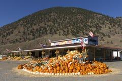 Winter Squash Organic Farm Keremeos Royalty Free Stock Images
