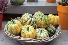 Winter squash pumpkin. Winter squash in a bowl royalty free stock image