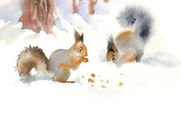 Winter squirrels eating nuts. In the snow Stock Photography
