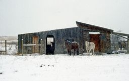 Winter Stable and Horses royalty free stock image