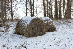 Winter a stack of dry grass in the grove covered with snow Stock Photo