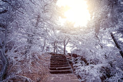 Winter stairway view in Huangshan National park. Royalty Free Stock Photography