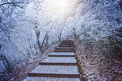 Winter stairway view in Huangshan National park. Stock Images