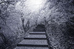 Winter stairway view in Huangshan National park. Stock Photo