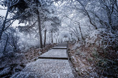 Winter stairway view in Huangshan National park. Royalty Free Stock Photo