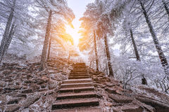 Winter stairway view in Huangshan National park. Stock Image