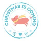 Winter stamp with text Christmas is coming pink pig blue snowflakes,. Winter stamp with text Christmas is coming pink pig blue snowflakes isolated on the white royalty free illustration
