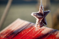Winter Star. A frosted winter star on a bird feeder Royalty Free Stock Photo