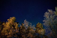 Winter starry nightscape Stock Photography