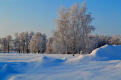 Winter in the steppe. The cold winter came to steppes of Altai Stock Photography