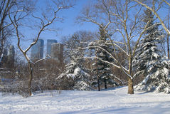 Winter Steps Central Park Royalty Free Stock Photography