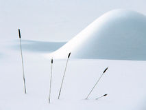 Winter Still Life. A very Zen picture of a winterscape Stock Photography