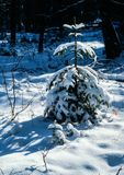 Winter. Still life,illustrations,forests royalty free stock images