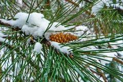 Winter still Royalty Free Stock Image