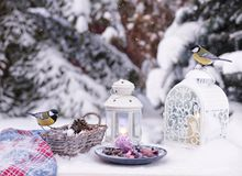 """Winter still life with small bird. {""""total_effects_actions"""":0,""""total_draw_time"""":0,""""layers_used"""":0,""""effects_tried"""":0,&#x22 stock image"""