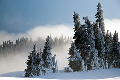 After The Winter Storm Royalty Free Stock Photography