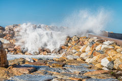 Winter storm against the beach. Waves and wind Stock Images