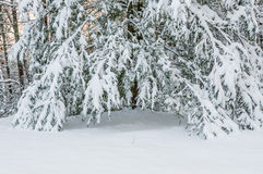 Winter storm  in appalachia. Royalty Free Stock Image
