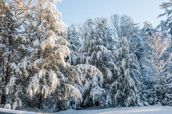 Winter storm  in appalachia. Royalty Free Stock Photo