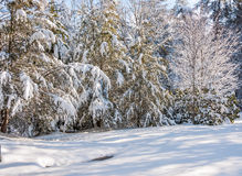 Winter storm in appalachia. Snow and ice covered trees after winter storm in southern appalachia stock images