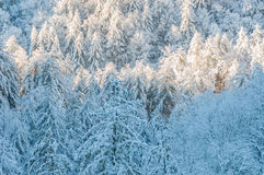 Winter storm  in appalachia. Royalty Free Stock Photography