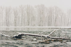 Winter Storm at the Bow River Stock Image
