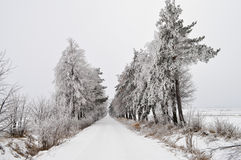 After winter storm Royalty Free Stock Photo