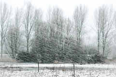 Winter storm in nature Royalty Free Stock Images