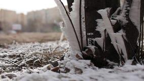 Winter storm stock video footage