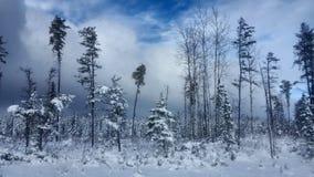 Winter-Straßen-Schneetanne, Thunder Bay Kanada Stockbilder