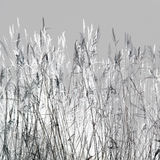 Winter Straw Royalty Free Stock Photography