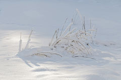 Winter, straw partly covered with snow Stock Image