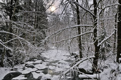 Winter stream Stock Images