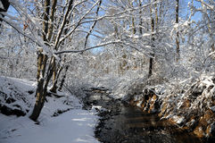Winter Stream. Lined with fresh snow and snow filled trees along the banks Royalty Free Stock Photo