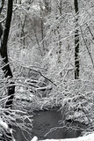 Winter stream. Stream running through woods with snow-frosted trees Stock Photography