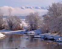 Winter Stream and Ducks Royalty Free Stock Images