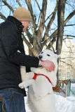 Husky dog bites a man's hand Stock Photography