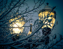 Winter street light. Among snowy frozen tree branches Royalty Free Stock Image