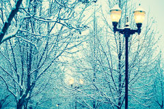 Winter street light. Among snowy frozen tree branches Royalty Free Stock Images