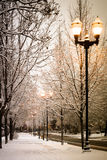 Winter street light. Among snowy frozen tree branches Stock Images