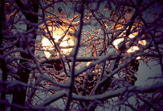 Winter street light. Among snowy frozen tree branches Stock Image