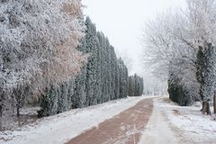 Winter street in the village. Royalty Free Stock Photography