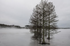 Winter at Stumpy Lake. In Virginia Beach, Virginia Royalty Free Stock Images