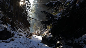 Winter in Sucha Bela gorge , Slovensky raj National park , Slovakia Royalty Free Stock Photography