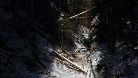 Winter in Sucha Bela gorge , Slovensky raj National park , Slovakia Royalty Free Stock Photo