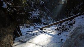 Winter in Sucha Bela gorge , Slovensky raj National park , Slovakia Royalty Free Stock Image