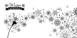 Winter and Summer. Winter Dandelion Background. Stock Photos
