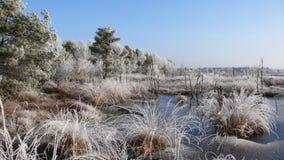 Winter-Sumpf Lizenzfreies Stockbild
