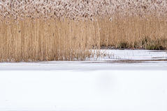 Winter-Sumpf-Hintergrund Lizenzfreies Stockfoto