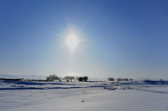 Winter sun Royalty Free Stock Photo
